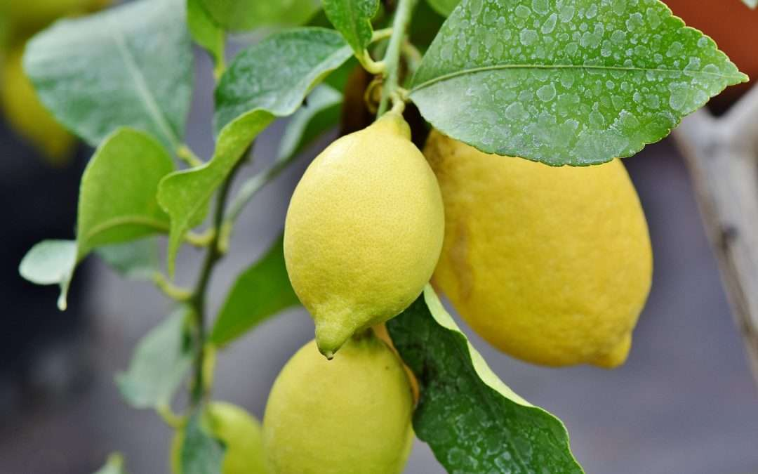 LEMONS!  TIPS AND TRICKS